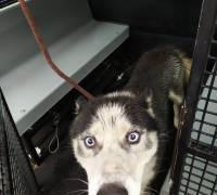Znaleziono psa: 14.08.2019