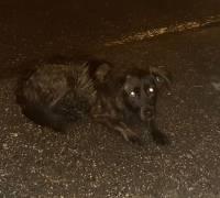 Znaleziono psa: 16.08.2019